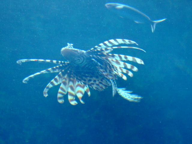 [2-2] 美ら海水族館